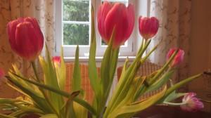 Niederländische Tulpen am Sonntagstisch...
