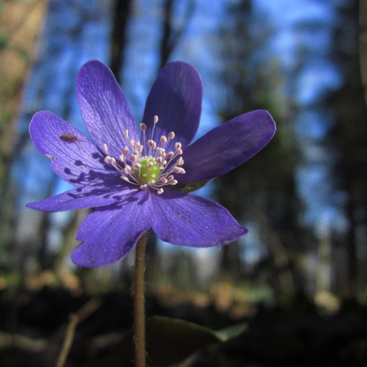 Forest Flower.