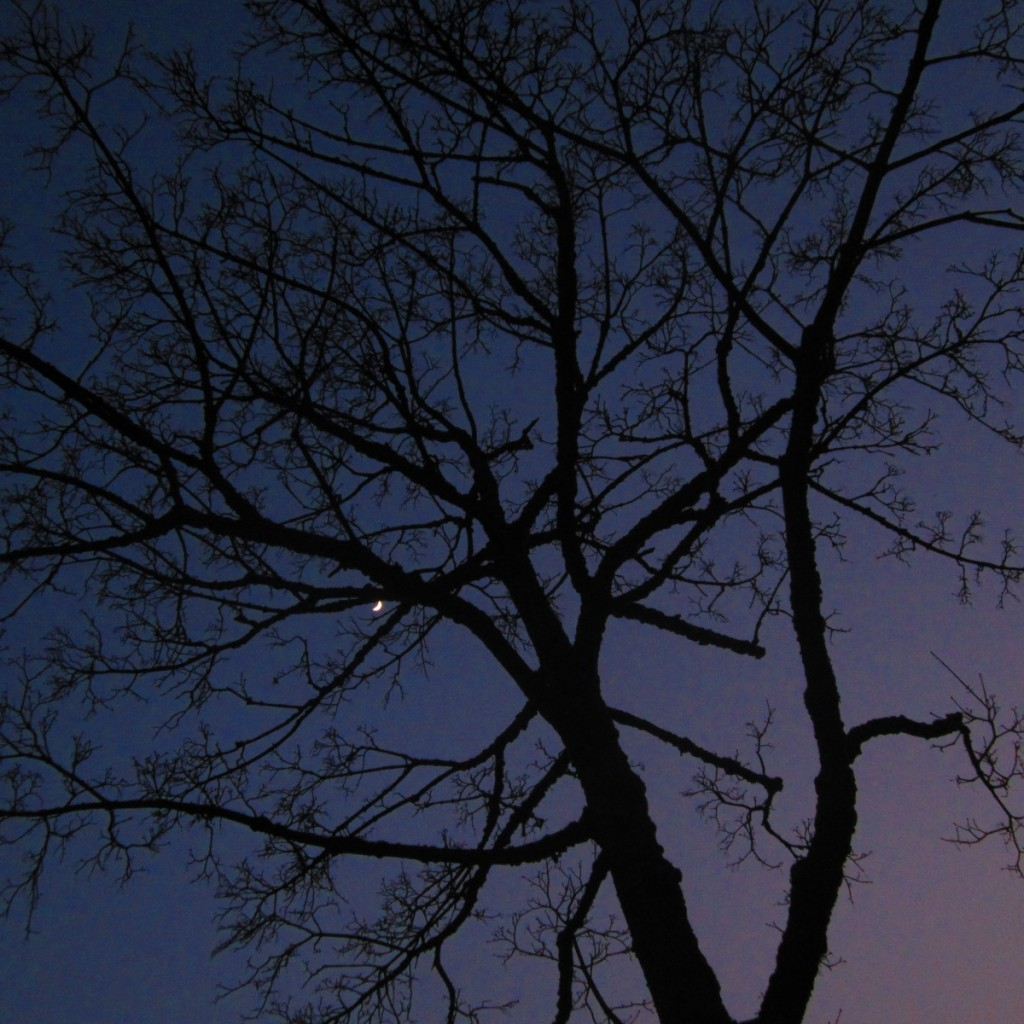 Księżyc na wieczornym niebie.
