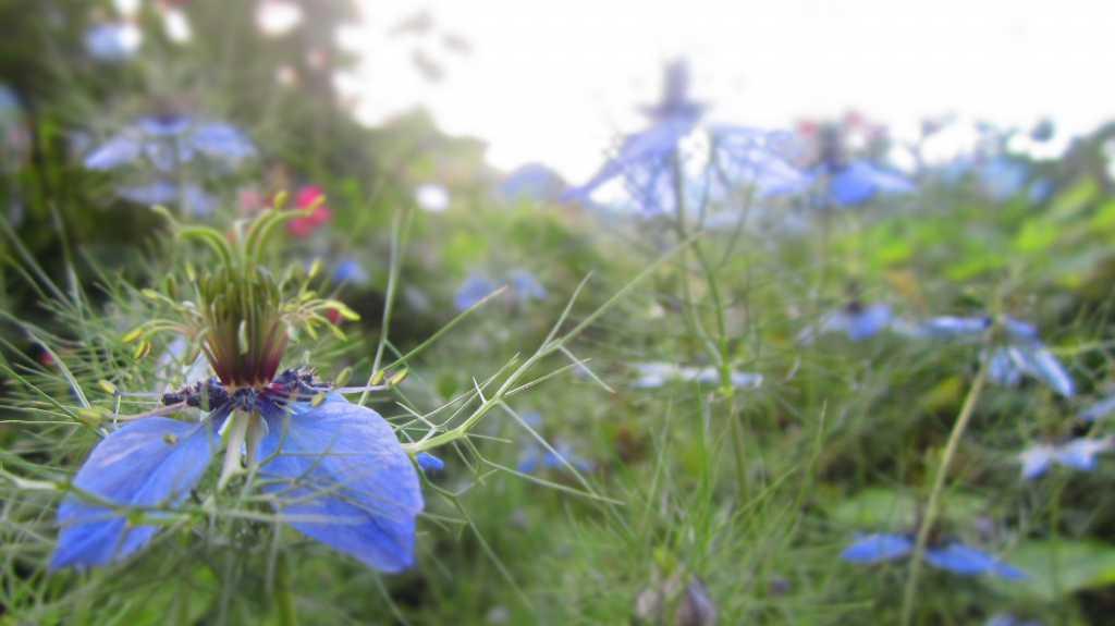 Sommer in Blau.