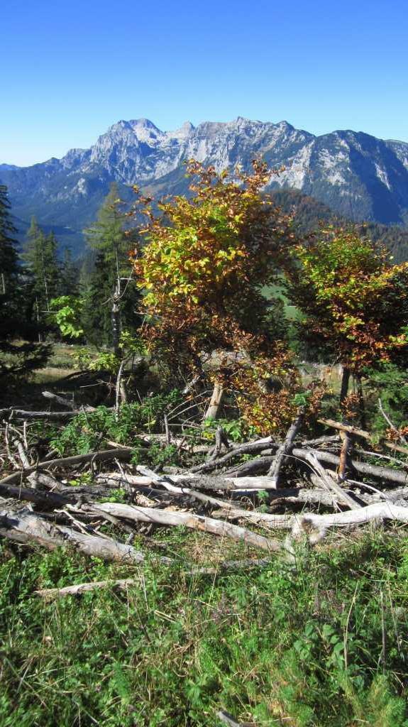 Herbst in den Alpen.