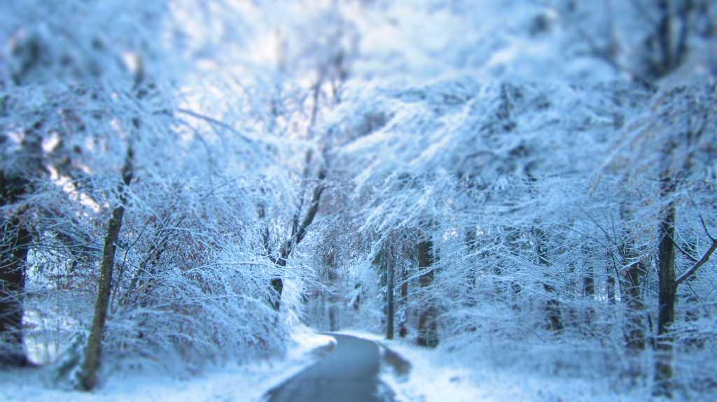 First Winter Snow 2014.