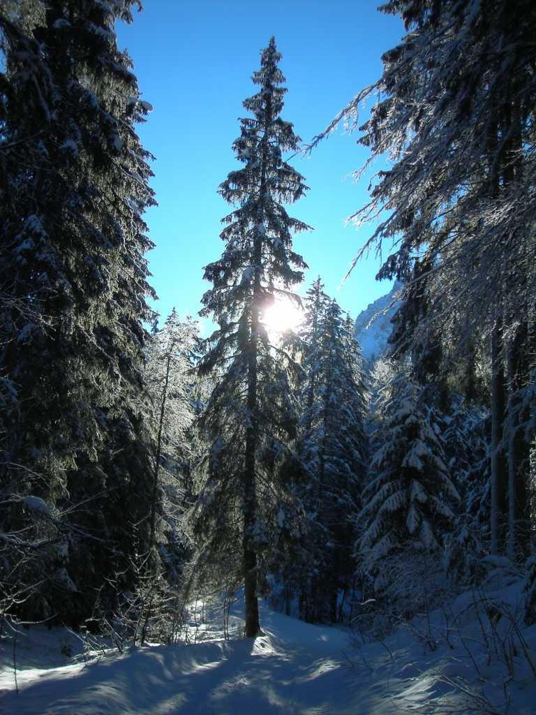Winter...Still...