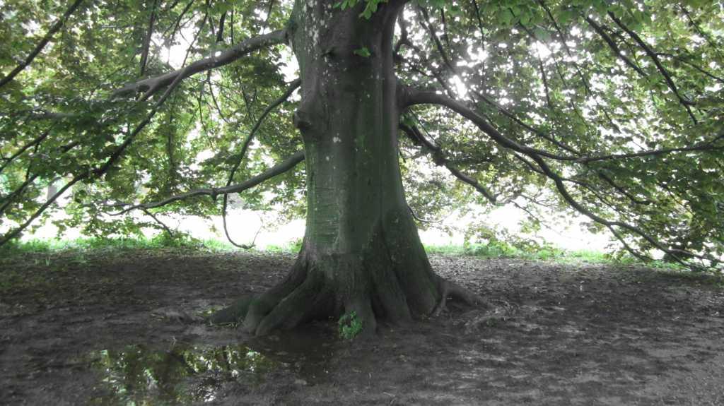 Wet Tree.