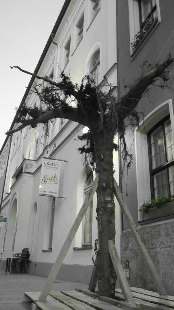 Entwurzelt...ein entwurzelter Baum als Skulptur in Traunstein.