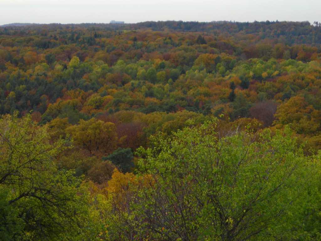 Fall On The Birkenkopf In Stuttgart, Germany